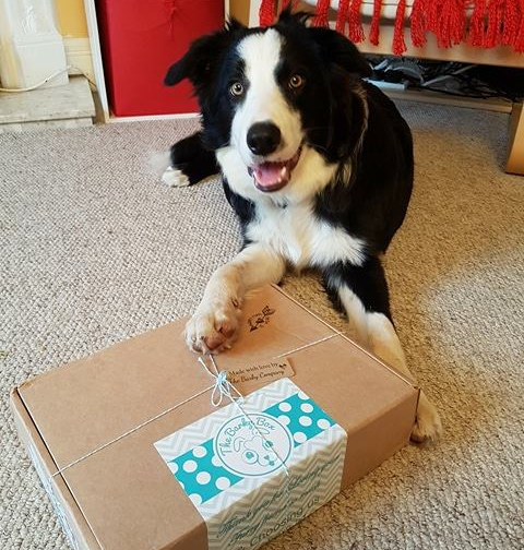 I love my Barky Box