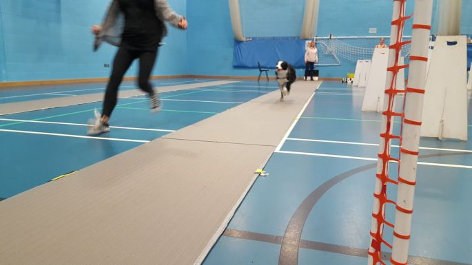 flyball run training