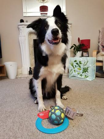 birthday presents dog border collie
